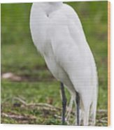 Great White Egret Vertical Wood Print