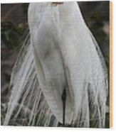 Great White Egret Windblown Wood Print