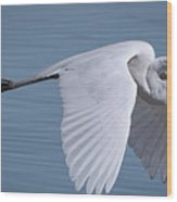 Great White Flight Wood Print