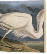 Great White Heron Wood Print