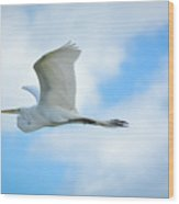 Great White In Flight Wood Print