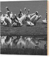 Great White Pelicans, Lake Nakuru, Kenya Wood Print