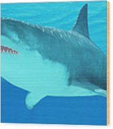 Great White Shark Close-up Wood Print
