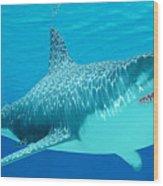 Great White Shark Undersea Wood Print