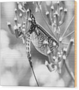 Great Wings  Black And White Dragonfly Wood Print