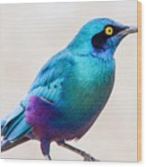 Greater Blue-eared Starling Wood Print