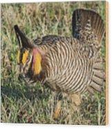 Greater Prairie Chicken Male 9 Wood Print