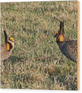 Greater Prairie Chicken Males 1 Wood Print
