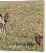 Greater Prairie Chicken Males 2 Wood Print