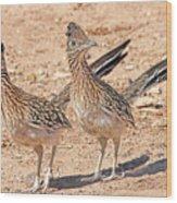 Greater Roadrunner Bird Wood Print
