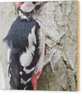 Greater Spotted Woodpecker Wood Print