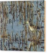 Greater Yellowleg In Reeds Wood Print