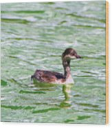 Grebe On Green Water Wood Print