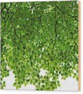 Green #001 Wood Print