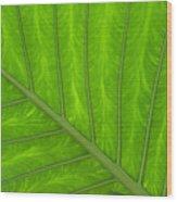 Green Abstract No. 4 Wood Print