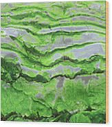 Green Algae Patterns On Exposed Rock At Low Tide, Gros Morne National Park, Ontario, Canada Wood Print