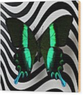 Green And Black Butterfly On Wavey Lines Wood Print
