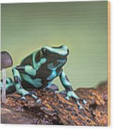 Green And Black Poison Dart Frog Wood Print