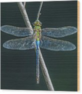 Green And Blue Dragonfly Wood Print