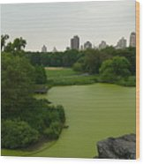 Green And Gray In Central Park Wood Print