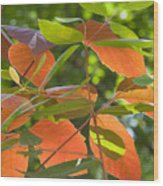 Green And Orange Leaves Wood Print