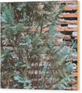 Green And Red - Cypress Branches Over Antique Roman Brick Wall Wood Print