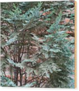 Green And Red - Slender Cypress Branches Over Rough Roman Brick Wall Wood Print