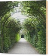 Green Arbor Of Mirabell Garden Wood Print