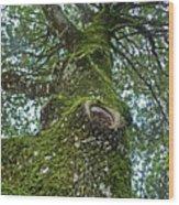 Green Arms Wood Print