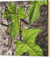 Green Arrowheads Wood Print