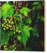 Green Berries Wood Print