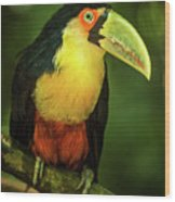 Green-billed Toucan Perched On Branch In Jungle Wood Print