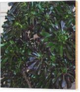 Green-black Cucculent Plant. Big Bush Wood Print