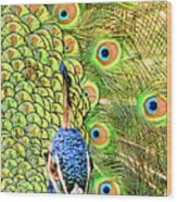 Green Blue Peacock Showing Off His Feathered Tail No2 Wood Print