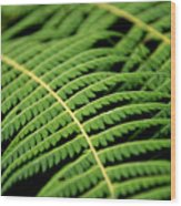 Green Bracken Wood Print