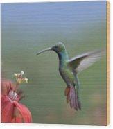 Green Breasted Mango Hummingbird Male Wood Print