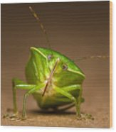 Green Bug Wood Print