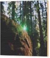 Green Burl Wood Print
