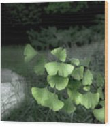 Green Butterflies  Wood Print