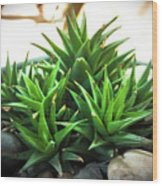Green Cactus Wood Print