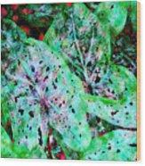 Green Caladium Wood Print