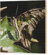 Green Checkered Skipper Wood Print