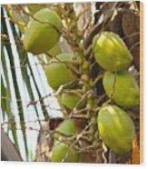 Green Coconut Wood Print