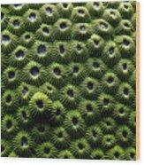 Green Coral Wood Print