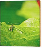 Green Creature On A Broad Leaf. Wood Print