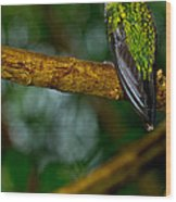 Green-crowned Brilliant Hummingbird Wood Print