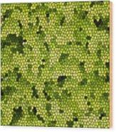 Green Curtain Wood Print