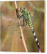 Green Dragonfly Closeup Wood Print