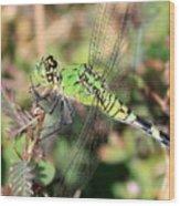 Green Dragonfly Macro Wood Print