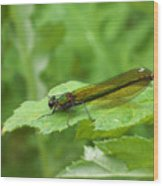 Green Dragonfly On Leaf Wood Print